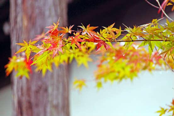 Buntes Laub auf Japan Herbstreise 2016