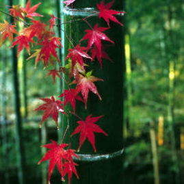 Goldener Herbst 2 Personen