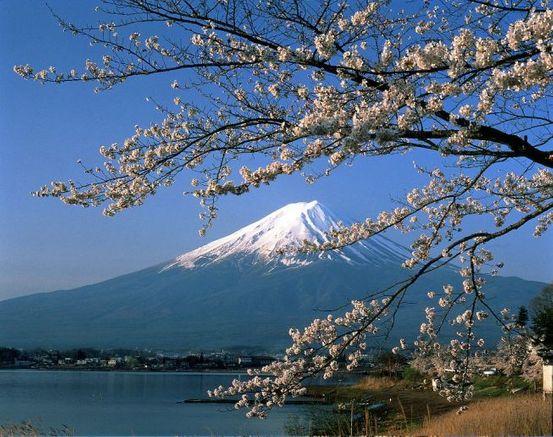 Kirschblueten in Japan Privatreise Muenchina
